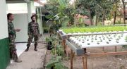 Bikin Demplot Hortikultura, Koramil Sulang Makin Asri