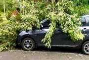 Angin Banter, Mobil Kebrukan Wit