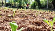Disperta Imbau Petani Hindari Pestisida Keras