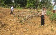 Dada Tertimpa Kayu Jati, Penebang Pohon Tewas Saat Dibawa Ke Puskesmas
