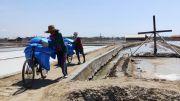 Ratusan Ribu Ton Garam Rakyat Tak Laku