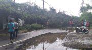 Disapu Angin dan Hujan, Pepohonan Pun Tumbang. Lokasinya Dimana Saja?