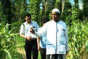 Terinspirasi Pangeran Katandur, Tanam Jagung hingga Porang