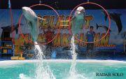 Nikmati Sensasi Bermain dengan Lumba-Lumba