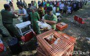 Cari Sebab Harga Ayam Anjlok, Ganjar Minta Dinas Duduk Bareng Peternak