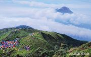 5 Ribu Pendaki Akan Muncak Merbabu, Ikuti Upacara 17 Agustus