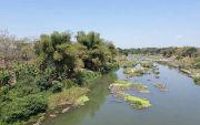 Asyik Mandi di Sungai, 2 Bocah Tewas Terseret Arus Bengawan Solo