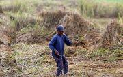 Wonogiri Darurat Bencana Kekeringan, Delapan Kecamatan Krisis Air