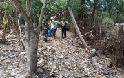 Sarang Tawon Ndas Bergeser ke Utara Bengawan