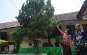 Siswa SMP Diamuk Tawon Vespa Affinis, Gara-Gara Lempari Batu ke Sarang