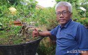 Semedi Budi Wibowo, Pensiunan Pejabat Tekuni Hobi Tanam Bonsai