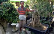 Kampung Bonsai Desa Sambungmacan, Jadi Jujukan Pecinta Tanaman Kerdil