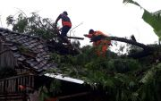 Hujan Deras Dini Hari Tumbangkan Sejumlah Pohon, Timpa Rumah Warga