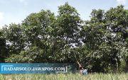 5.000 Hektare Lahan di Sukoharjo Terancam Terdampak Kekeringan