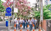 Tabebuya Jadi Ikon Surabaya, Risma: Perlu Dikembangkan Warga