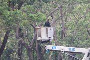 Cegah Dampak Angin Kencang, Pemkot Rantingi 800 Pohon