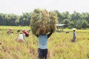Masuki Masa Panen, Pemerintah Diminta Tunda Impor Beras