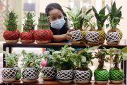 Media Tanam Koke Dama: Simpel dan Estetis, Cocok untuk Tanaman Indoor
