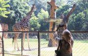 Obyek Wisata Dibuka Hanya untuk Warga Ber-KTP Surabaya