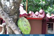 Berpotensi, Produksivitas Kakao Perlu Digenjot