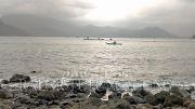 Banjir Rob, Nelayan Justru Panen Ikan