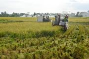 Serapan Sektor Pertanian Paling Kecil