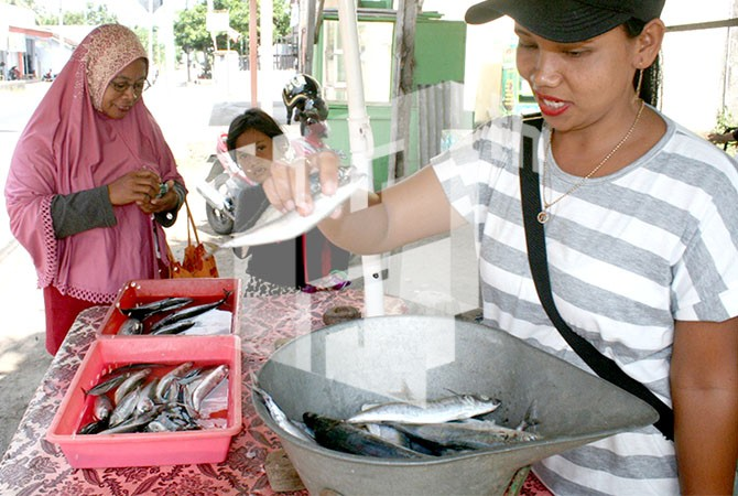 Harga Ikan Murah