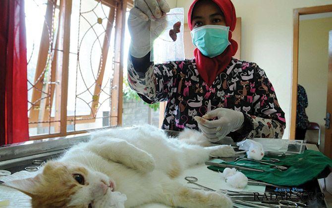 Cegah Rabies Disnakkan Sterilisasi Kucing Dan Anjing